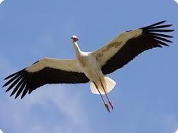 Aguila Ventas